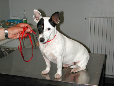 Dermatite Atopica del cane e del gatto